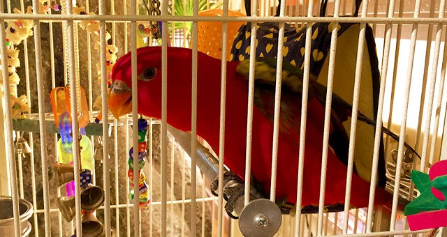 鳥のいるカフェ フクロウカフェ 看板インコ