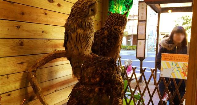 鳥のいるカフェ フクロウカフェ 店内写真